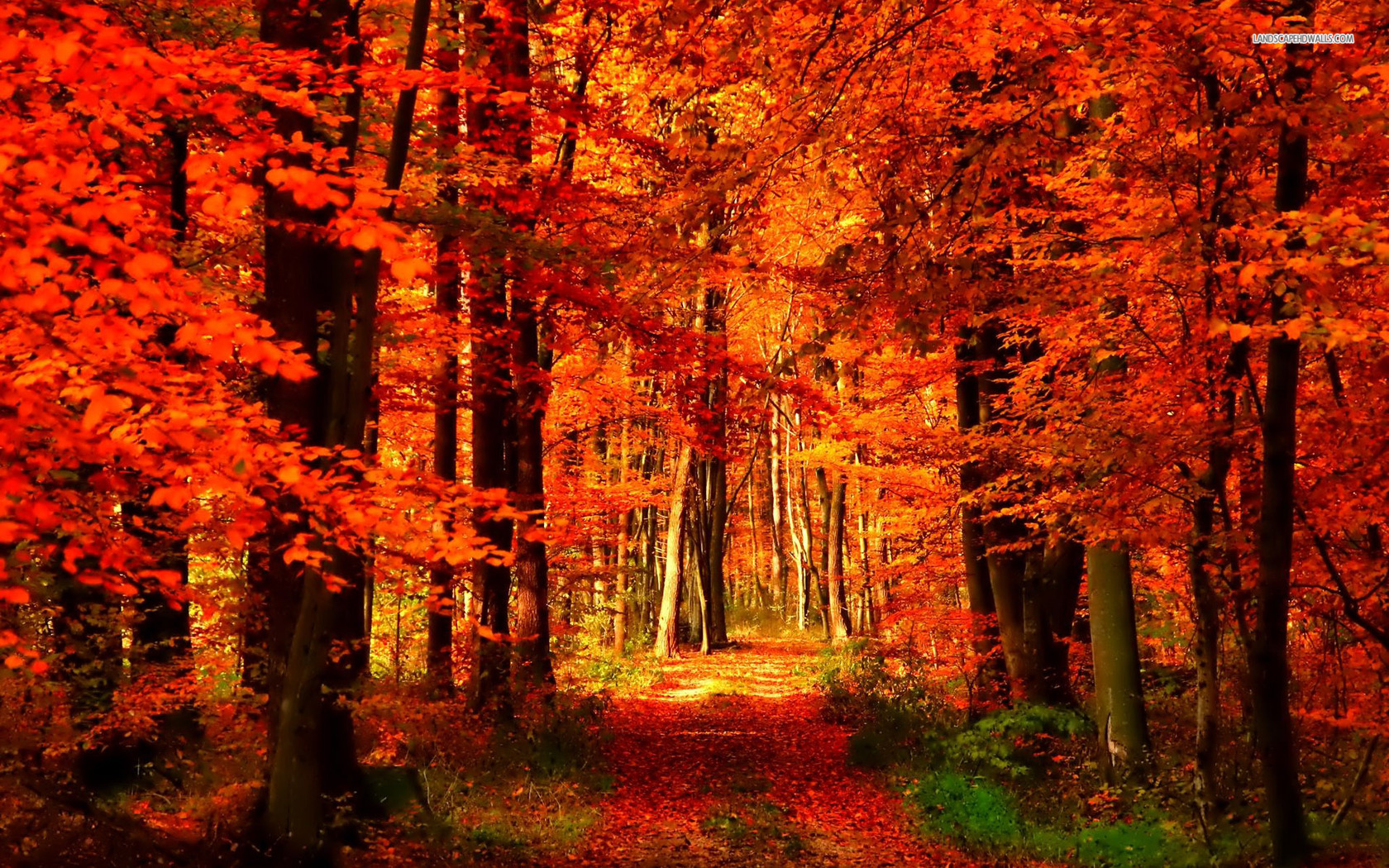 orange-and-red-autumn-forest
