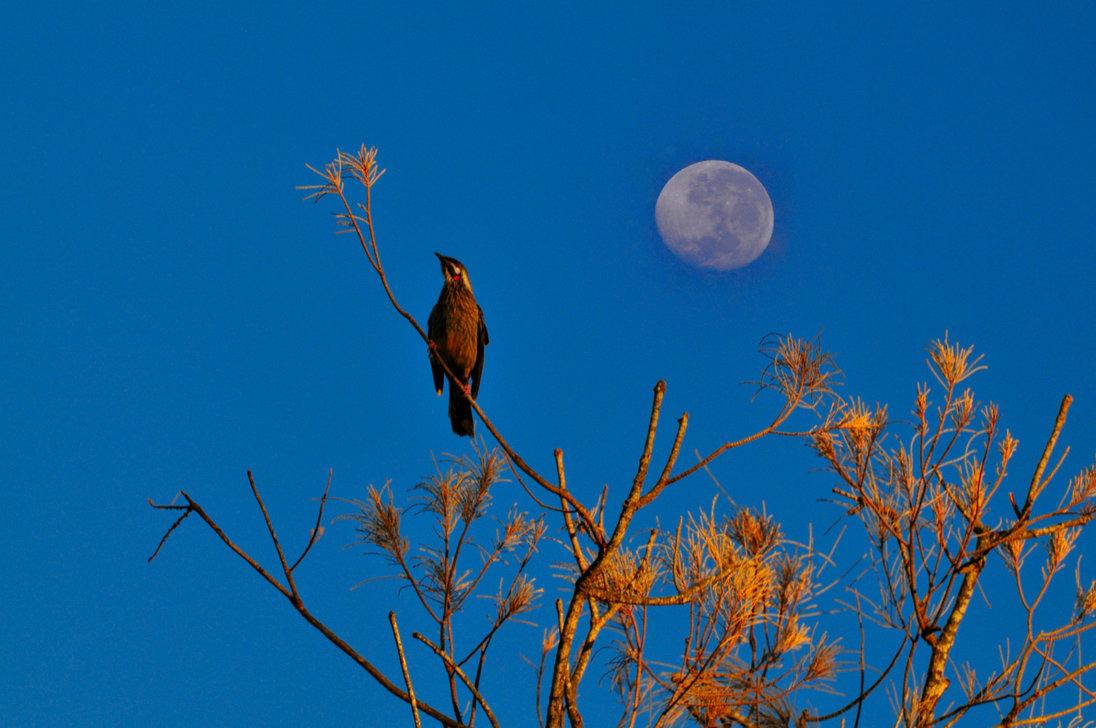 the_early_bird__1__by_hansgoepelphotograpy-db43xve.jpg