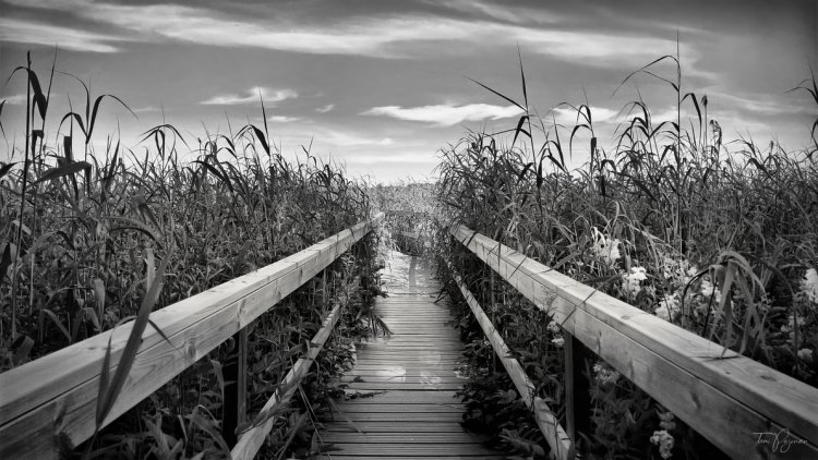 down_the_aisle_by_pajunen-dc0mjlr