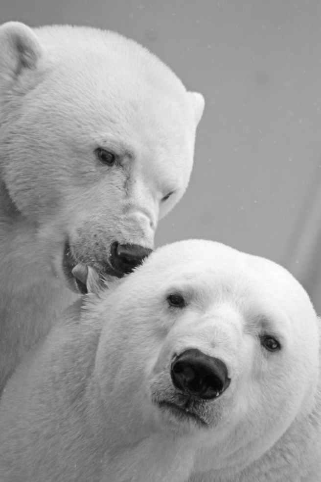 polar-bear-bear-teddy-sleep-65320.jpeg